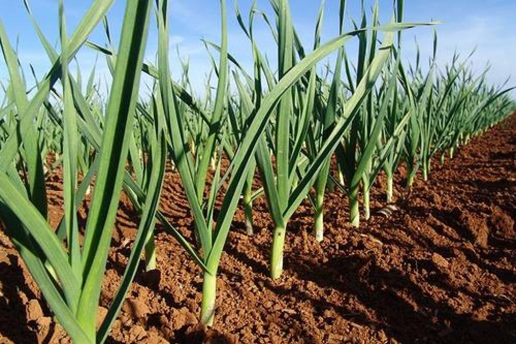 Ibema estimula diversificação e avanços na agricultura familiar
